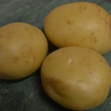 1142 WASHED POTATO (A)